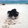 Skeppskatten Soffie undersöker krabborna som bor i alla snäckor. Plötsligt ger sig alla snäckor av på en gång.