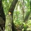 Skeppskatten Soffie fick följa med på tur i palmskogen