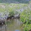Flodtur