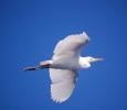 Fågel som flög så här vackert runt omkring oss långt ute till havs
