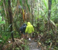 Regnigt i regnskogen