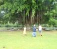 Magnifikt träd vid floden