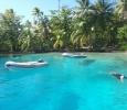 Snorkling bland tropiska fiskar