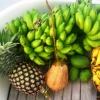 Härlig frukt i utbyte mot glasögon och segelduk