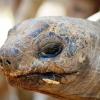 Sköldpadda som är 205 år gammal