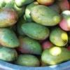 Solmogna mango
