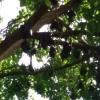 Fladdermöss