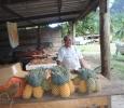 söt solmogen ananas till försäljning för en spotstyver. Vi frossar!