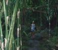Trolsk bambuskog