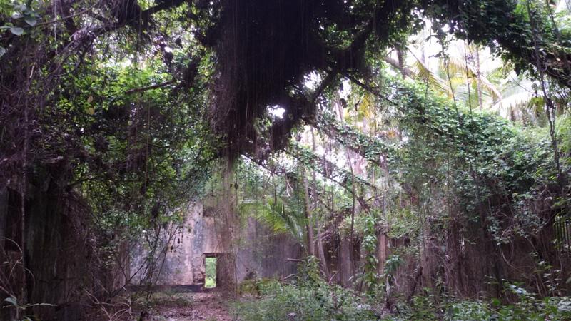 Här har fängelsemurarna förvandlats till ett grönt rum, väldigt speciell atmosfär